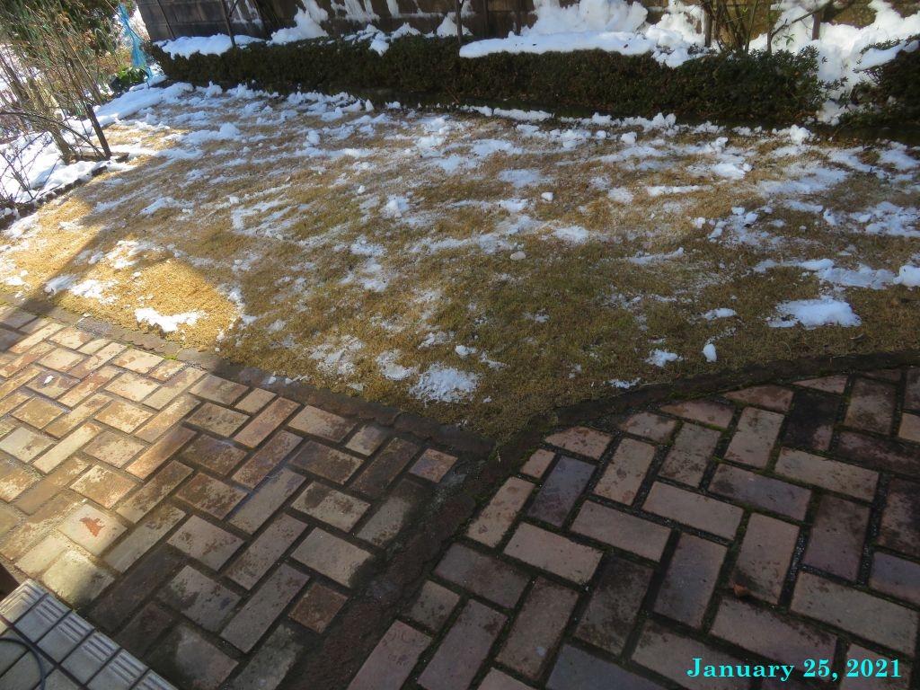 画像5(芝生の雪かき)