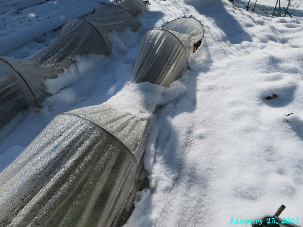 画像7(雪に押しつぶされたトンネル)
