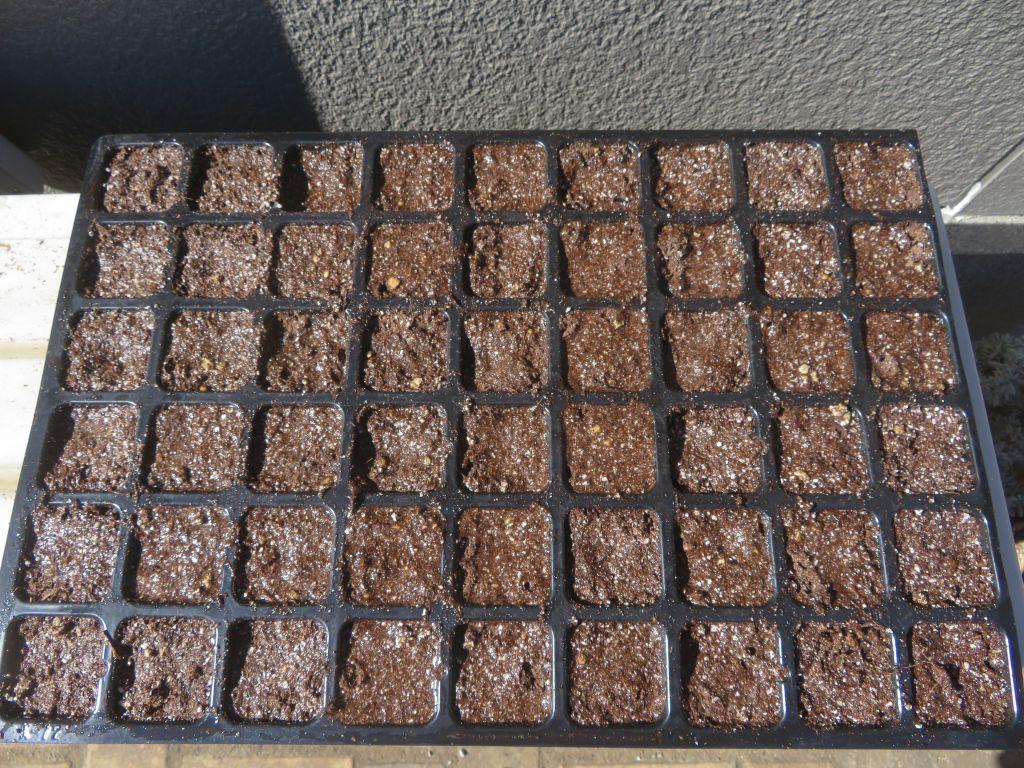 画像11(セルトレイの種まき培土)