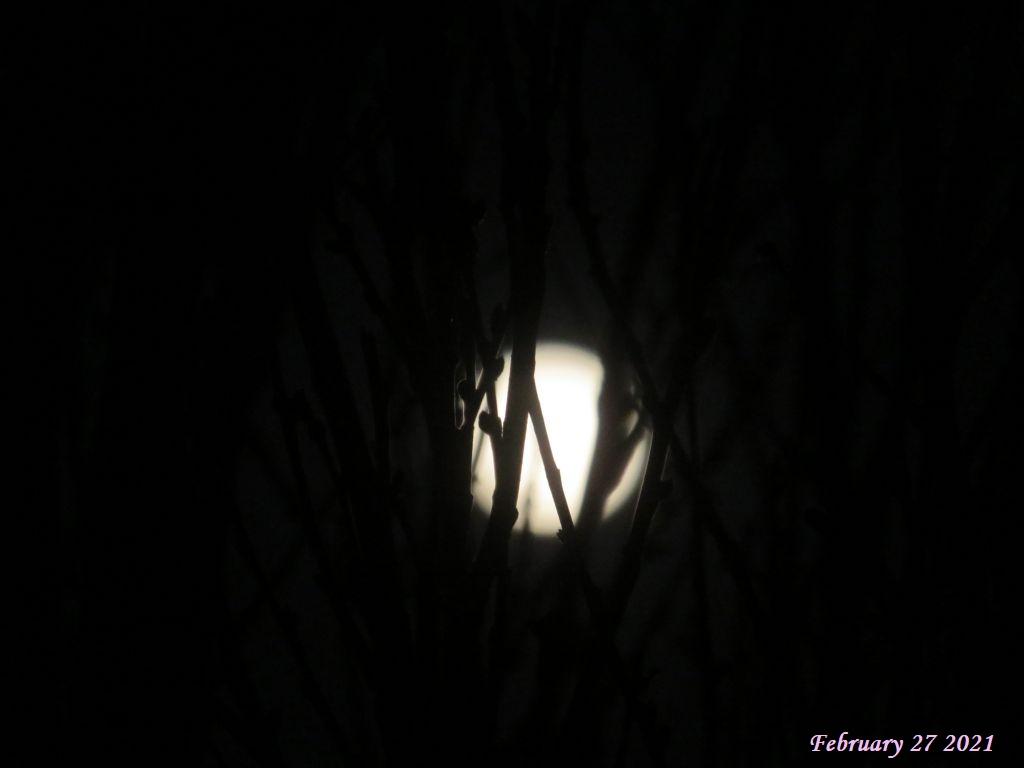 画像2(満月)