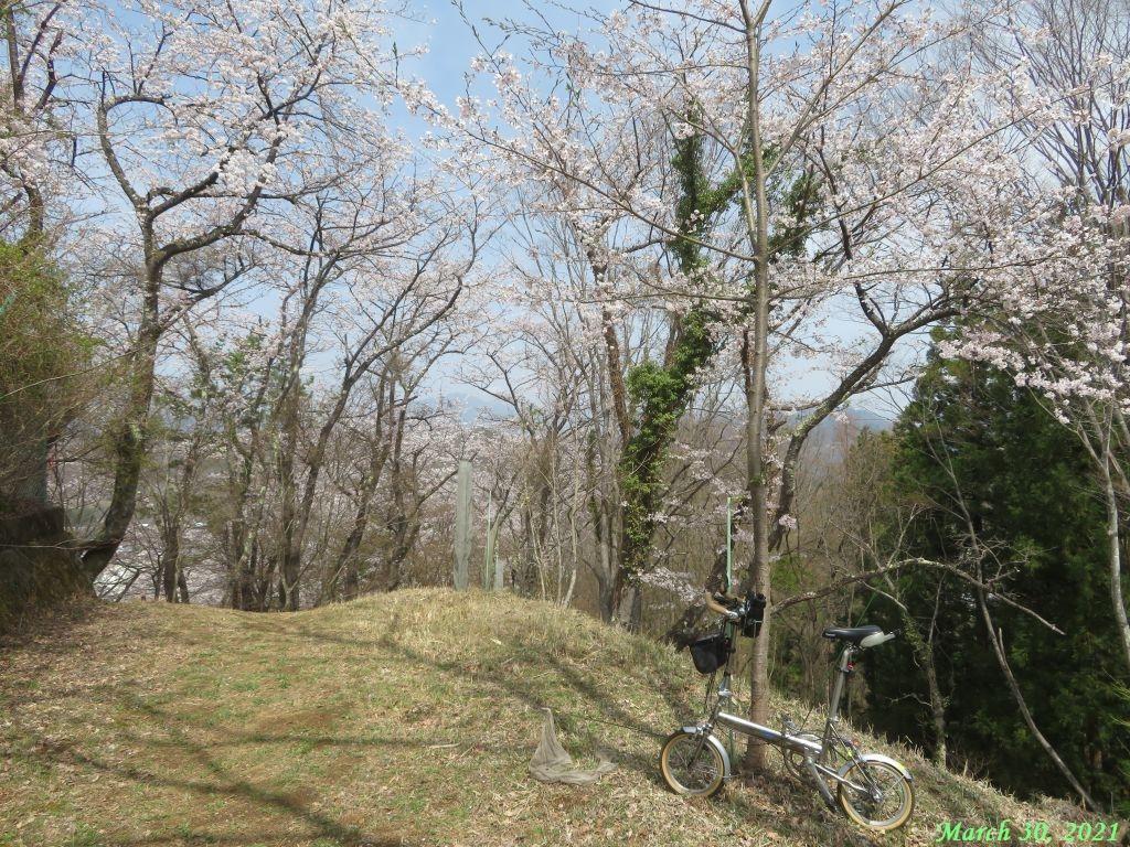 画像5(楽山公園の桜)