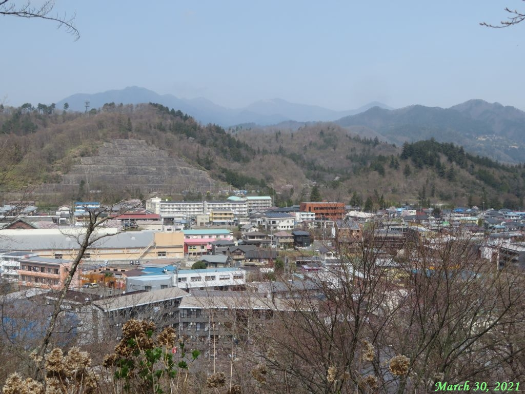 画像6(楽山公園の桜)