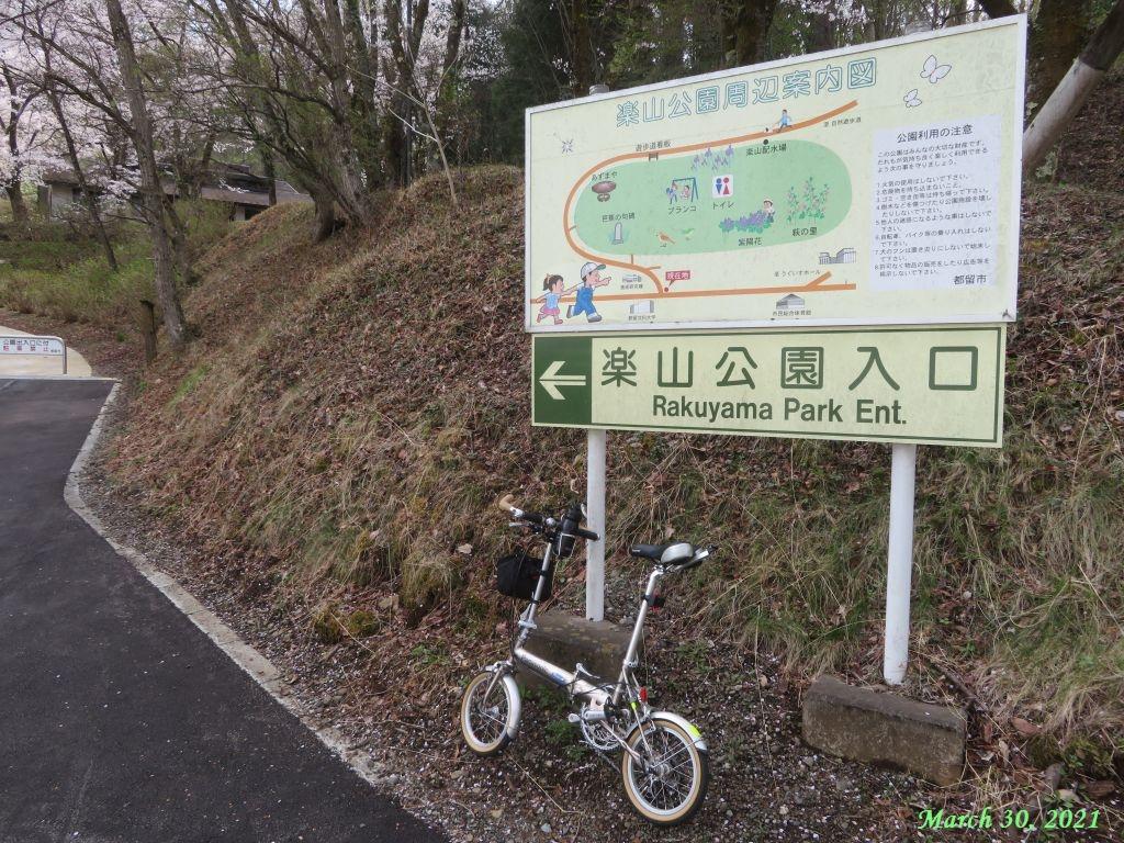 画像8(楽山公園の桜)
