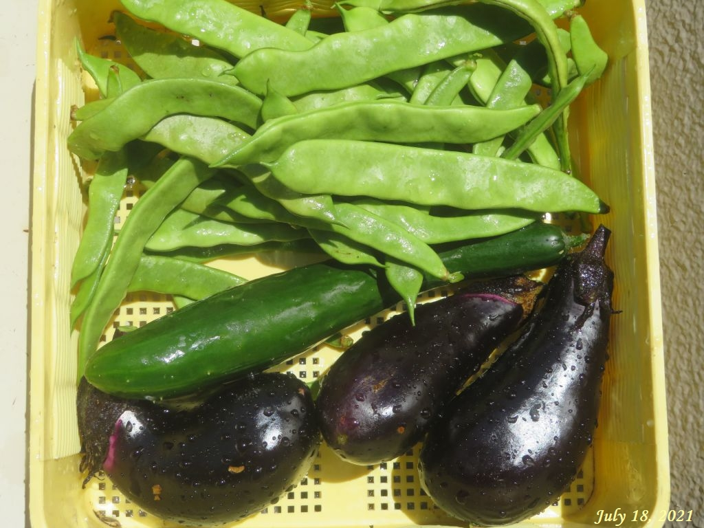 画像8(収穫したインゲン・茄子・胡瓜)