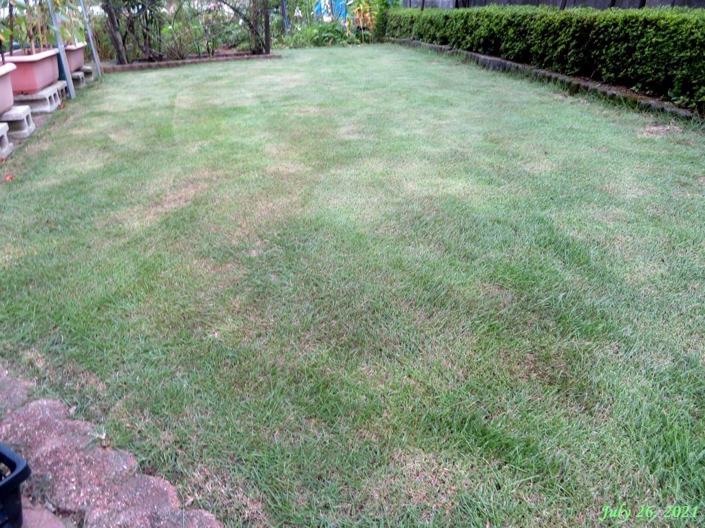 画像8(芝刈り後の芝生)