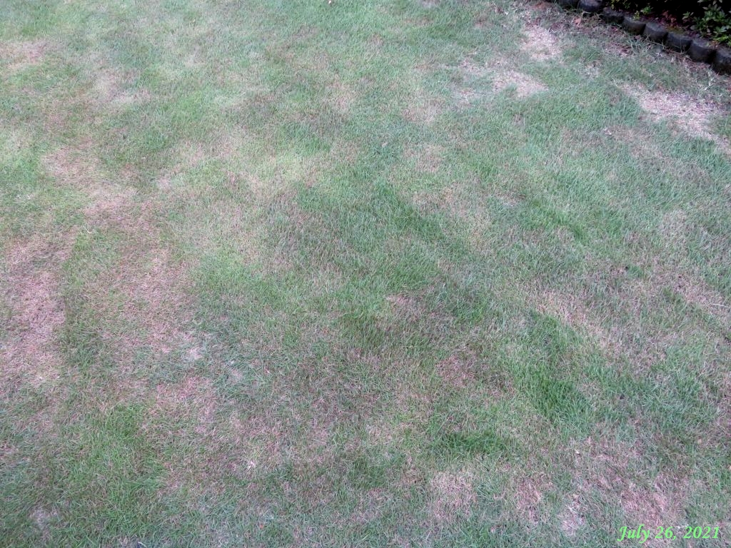 画像9(葉が褐色になった芝)