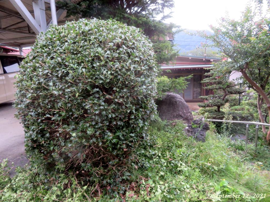 画像4(庭木の剪定と草取り)