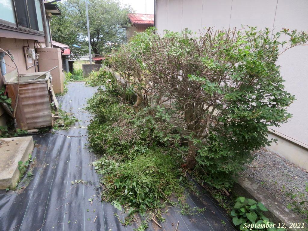 画像7(庭木の剪定と草取り)