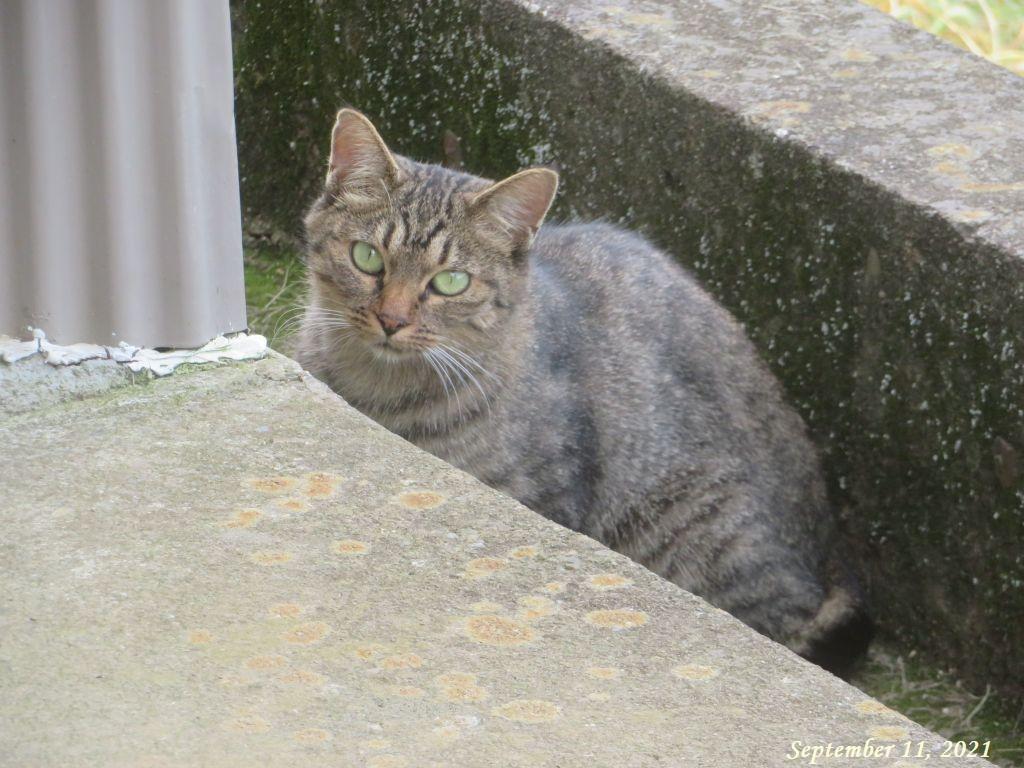 画像9(野良猫)
