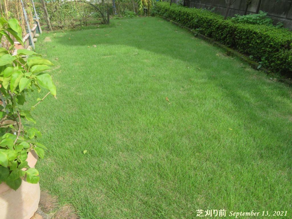画像18(芝刈り前の芝生)
