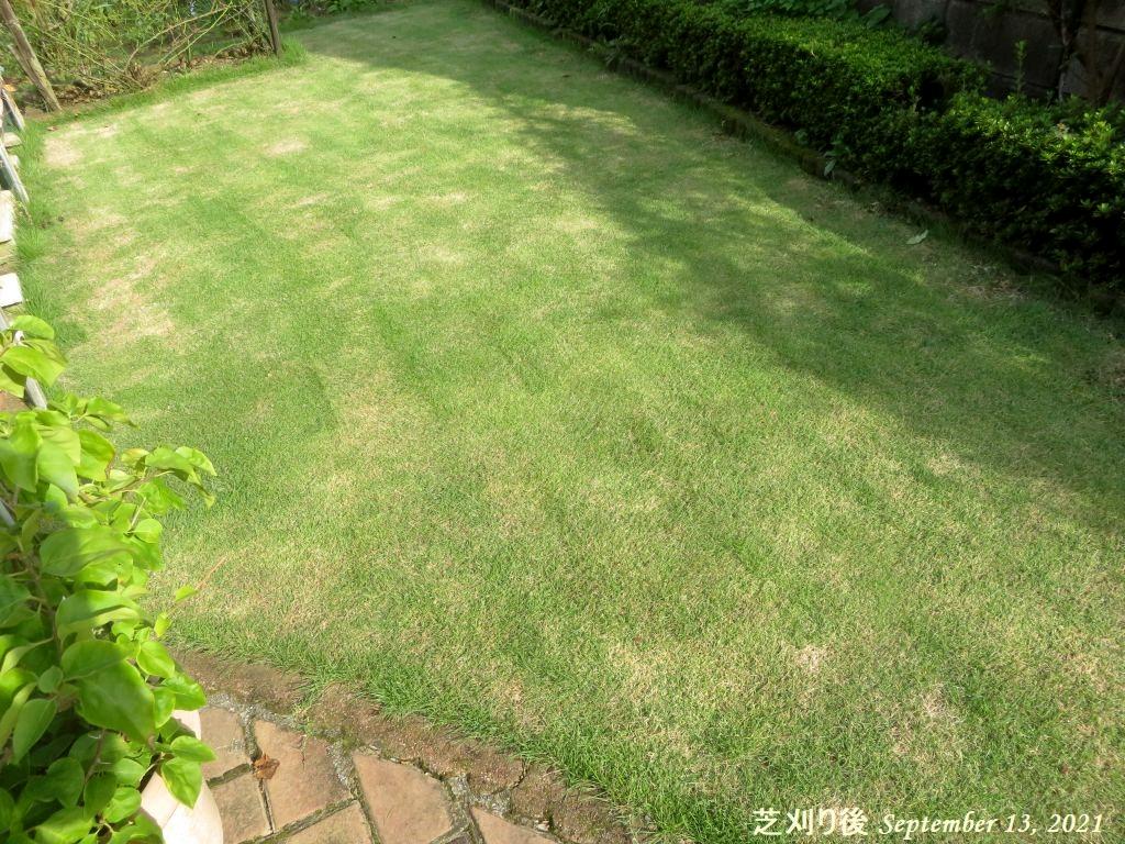画像20(芝刈り後)