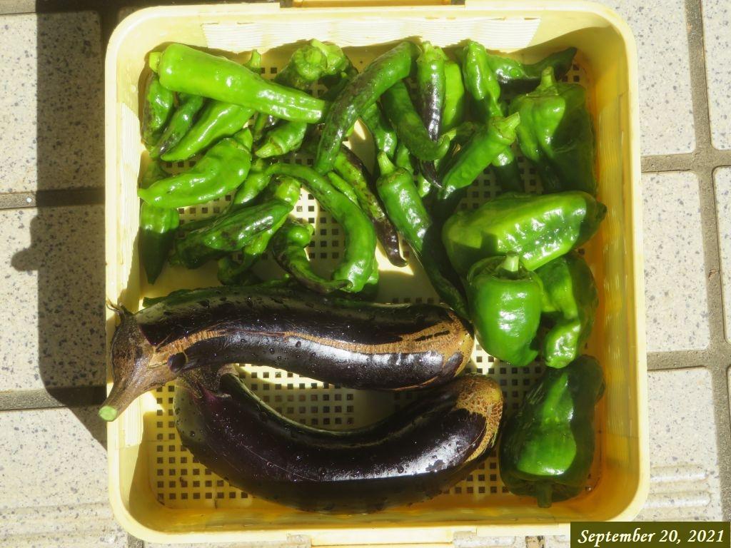 画像17(収穫野菜)