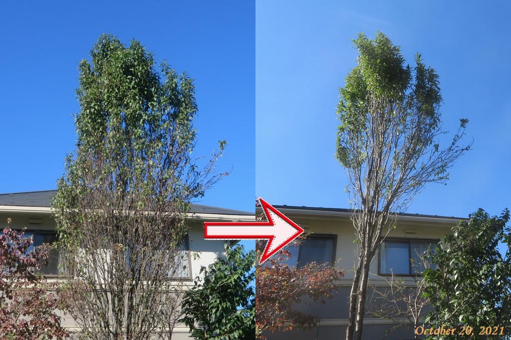 画像9(ハナモモの木)