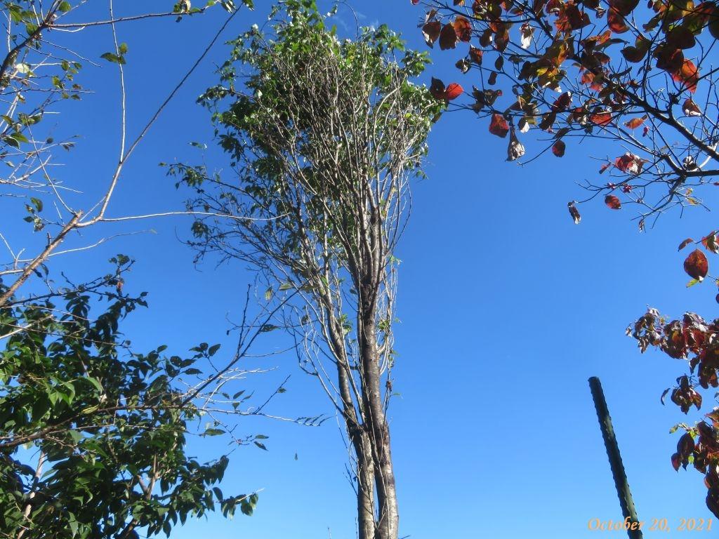 画像10(ハナモモの木)