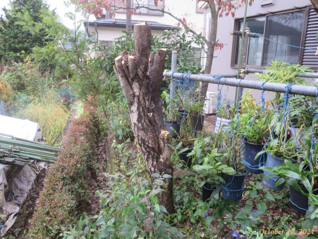 画像7(ハナモモの木)
