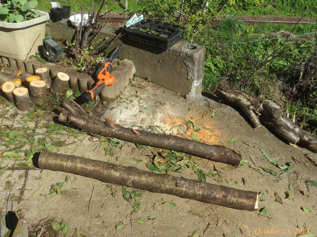 画像11(短く裁断したハナモモの木)